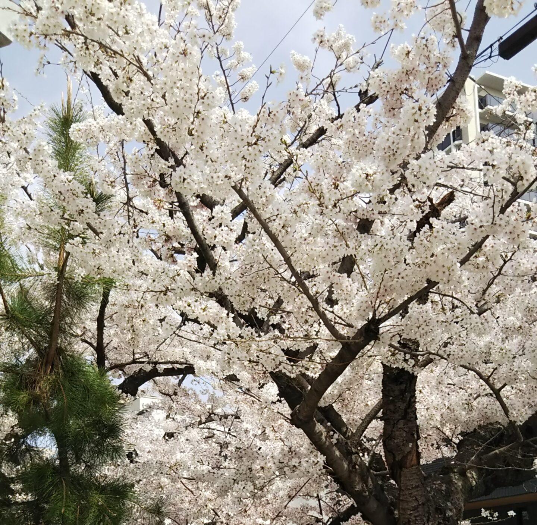 春みーつけた/豊中市 保育園
